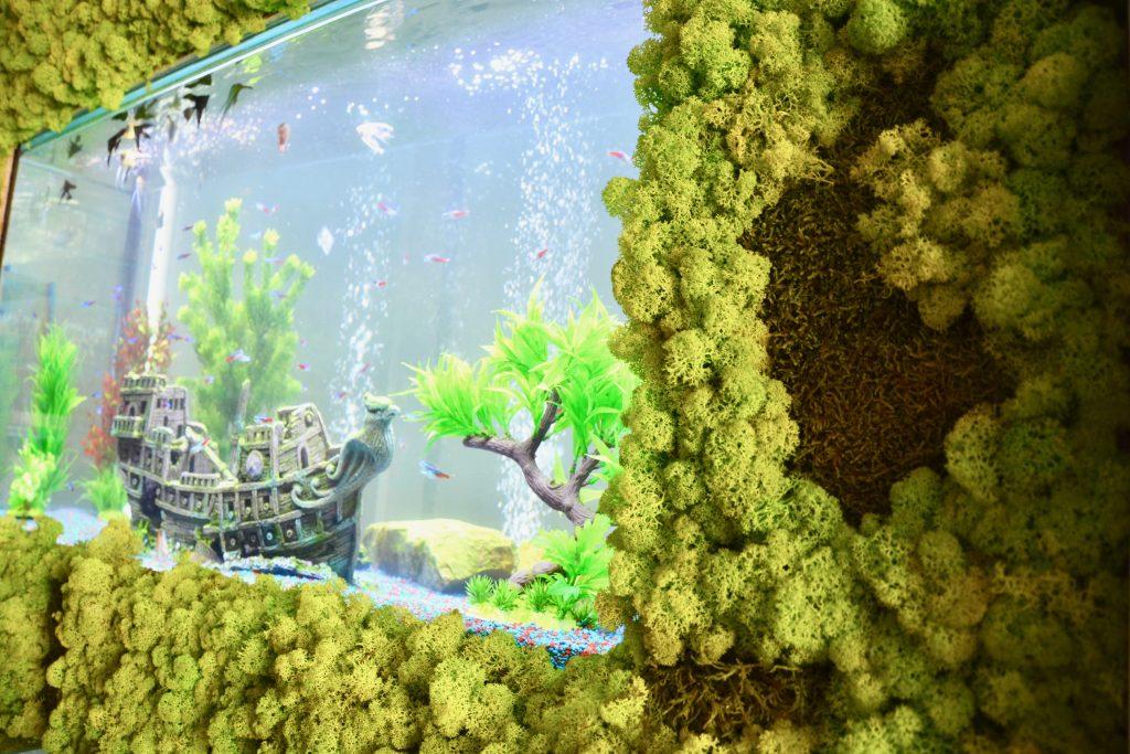 Perete din licheni decorativi si muschi stabilizati| multicolor